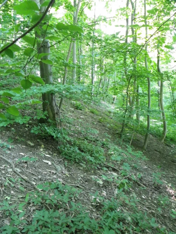 beschreibung zum naturschutzgebiet almeh nge bei ahden und wewelsburg kreis paderborn. Black Bedroom Furniture Sets. Home Design Ideas